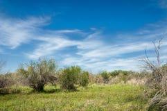 Estepe, pradaria, meseta, savana Fotos de Stock