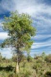 Estepe, pradaria, meseta, savana Imagens de Stock