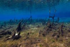 Esteras de las algas en la primavera