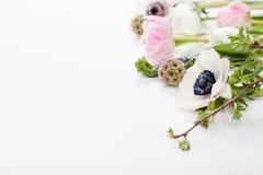Esterblommor, kryddnejlikor och smörblommor Fotografering för Bildbyråer