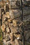 Estere de madeira imagem de stock royalty free