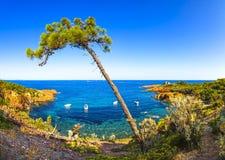 Esterel, árvore, rochas encalha a costa e o mar Costa Azur, Provence, F imagens de stock
