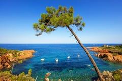 Esterel, Baum, Felsen setzen Küste und Meer auf den Strand Taubenschlag Azur, Provence, F Stockbilder