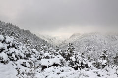 Esterel mountains under snow, france Royalty Free Stock Image