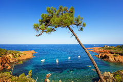 Esterel, tree, rocks beach coast and sea. Cote Azur, Provence, F. Esterel mediterranean tree, red rocks coast, beach and sea. French Riviera in Cote d Azur near stock images