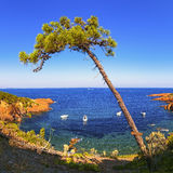 Esterel, tree, rocks beach coast and sea. Cote Azur, Provence, F Stock Photography