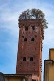 Esterno del Torre Guinigi, Lucca, Italia, una torre alta che forniscono l'opinione meravigliosa della città e popolare con i turi Immagine Stock Libera da Diritti