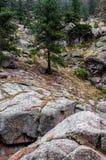 Estes公园科罗拉多落矶山脉森林风景 图库摄影