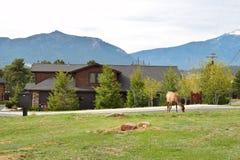 Estes Park in Colorado Royalty Free Stock Photography