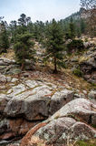 Estes Park Colorado Rocky Mountain Forest Landscape Stock Afbeeldingen