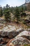 Estes Park Colorado Rocky Mountain Forest Landscape Stock Images