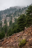 Estes Park Colorado Rocky Mountain Forest Landscape Stock Photography
