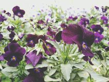 Estetiska blommor Arkivfoton