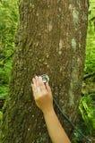 Estetoscópio na árvore que verific a saúde imagem de stock