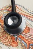 Estetoscopio Fotografía de archivo
