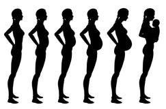 Estágios da gravidez da mulher Foto de Stock