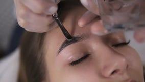 Esthetician past verf op brows van jonge vrouw door bruine kleurstof toe, die procedure in een schoonheidsstudio kleuren, close-u stock videobeelden