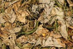 Estiércol vegetal Foto de archivo