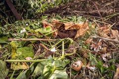 Estiércol vegetal natural con los argumentos de café usados Imagen de archivo libre de regalías
