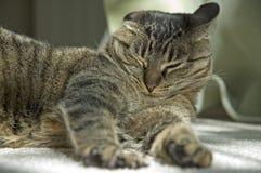 Esticando o gato em um dia morno Imagens de Stock