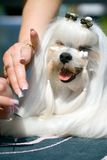 Estilista del animal doméstico Fotos de archivo libres de regalías