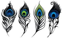 Estilizado, plumas del pavo real del vector Imagen de archivo