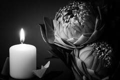 Estilo blanco y negro de la imagen en flowe plegable del lirio o del loto de agua Fotografía de archivo libre de regalías