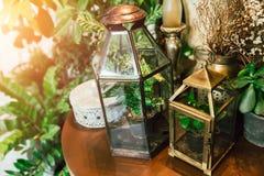 Estilo botânico da decoração da casa da planta verde da fantasia fotografia de stock