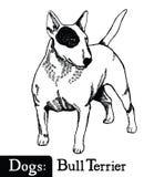 Estilo bull terrier del bosquejo del perro Fotografía de archivo libre de regalías