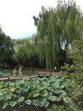 Estilo chinês do jardim Fotos de Stock