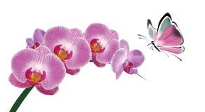Orquídea y mariposa Foto de archivo libre de regalías