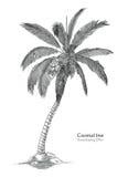 Estilo da gravura do desenho da mão da árvore de coco Foto de Stock Royalty Free