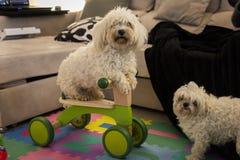 Estilo de la bici del perrito foto de archivo libre de regalías