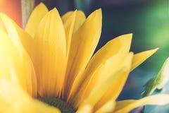 Estilo de la imagen del vintage con la opinión superior y el foco selectivo en amarillo Fotos de archivo libres de regalías