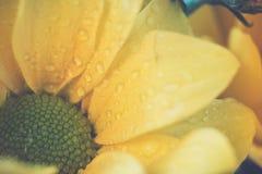 Estilo de la imagen del vintage con la opinión superior y el foco selectivo en amarillo Foto de archivo