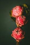 Estilo de la imagen del vintage en lirio de agua o la flor de loto plegable rosado Imagen de archivo
