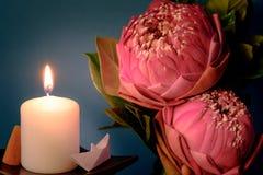 Estilo de la imagen del vintage en lirio de agua o la flor de loto plegable rosado Fotos de archivo