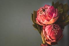 Estilo de la imagen del vintage en lirio de agua o la flor de loto plegable rosado Imagen de archivo libre de regalías