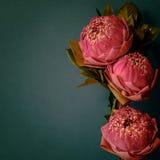 Estilo de la imagen del vintage en lirio de agua o la flor de loto plegable rosado Fotografía de archivo