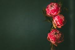Estilo de la imagen del vintage en lirio de agua o la flor de loto plegable rosado Foto de archivo