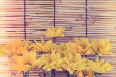 Estilo de la imagen del vintage y foco selectivo en el flawer amarillo del galán Fotos de archivo