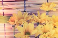 Estilo de la imagen del vintage y foco selectivo en el flawer amarillo del galán Foto de archivo libre de regalías