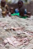 Estilo de secagem da ilha do calamar de Sun Imagens de Stock Royalty Free