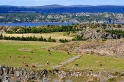 Estilo de Terra Nova da exploração agrícola de leiteria Fotografia de Stock