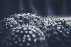 Estilo del vintage del cactus Fotografía de archivo libre de regalías