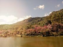 Estilo do vintage das árvores da flor de cerejeira Foto de Stock