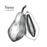 Estilo do vintage do desenho da mão da papaia Imagem de Stock