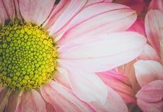 Estilo floral do vintage do tom à moda, íntimo As comunicações bonitas do vintage estão demonstrando seu amor do foco macio Fotografia de Stock