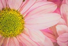 Estilo floral do vintage do tom à moda, íntimo As comunicações bonitas do vintage estão demonstrando seu amor do foco macio Imagem de Stock