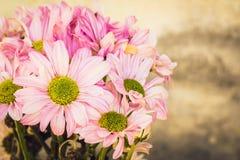 Estilo floral do vintage do tom à moda, íntimo Pétalas bonitas do cartão do vintage Foto de Stock Royalty Free